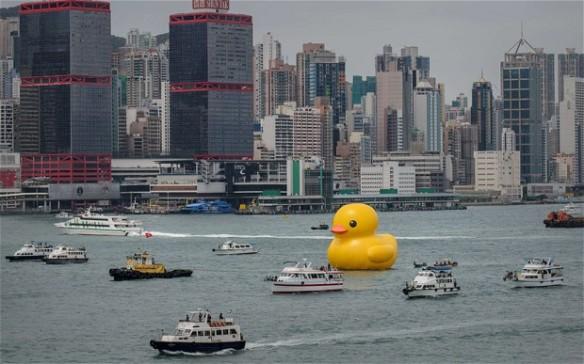 duck_2552566b